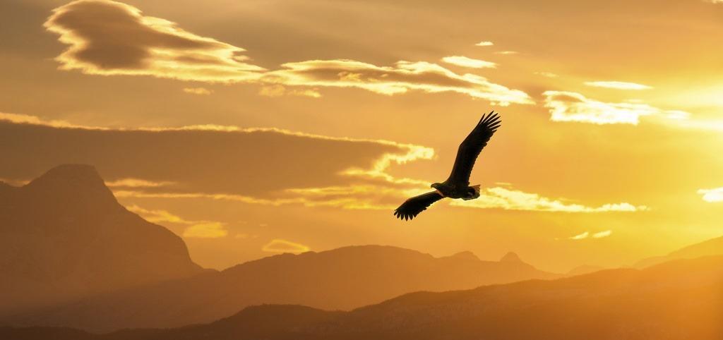 eaglesoaring02
